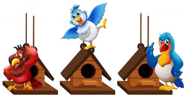Três pássaros de arara papagaio na casa de passarinho