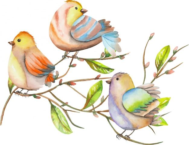 Três pássaros em aquarela em galhos de árvores, ilustração de primavera