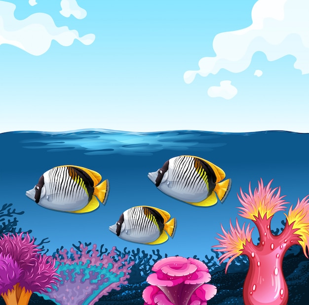 Três peixes nadando no fundo do oceano