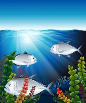 Três peixes nadando no oceano