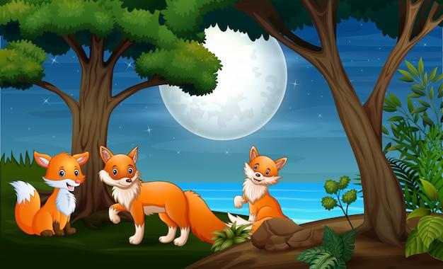Três raposas caçam à noite