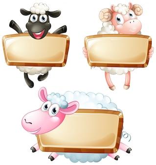 Três sinais em branco com ovelhas bonitas