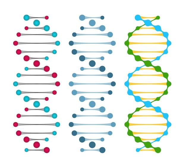 Três variantes de moléculas de dna de fita dupla mostrando os pares de nucleotídeos em uma ilustração vetorial de dupla hélice