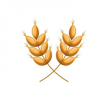 Trigo, folhas, isolado, ícone
