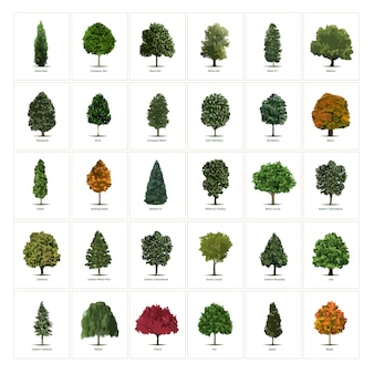 Trinta diferentes ilustrações de árvores vetoriais