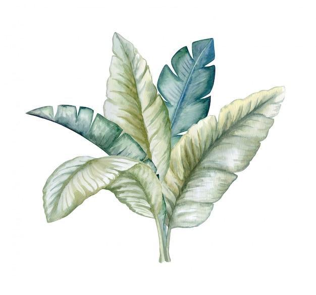 Tropical deixa ilustração aquarela