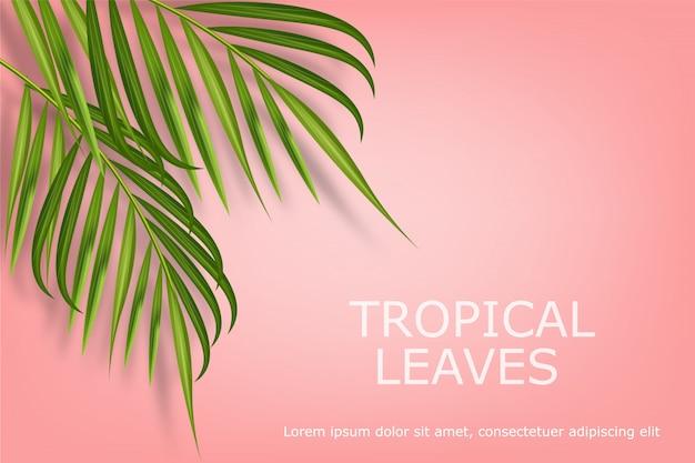 Tropical deixa realista isolado, fundo rosa