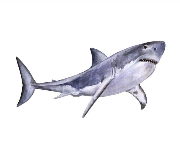 Tubarão branco em aquarela. aquarela