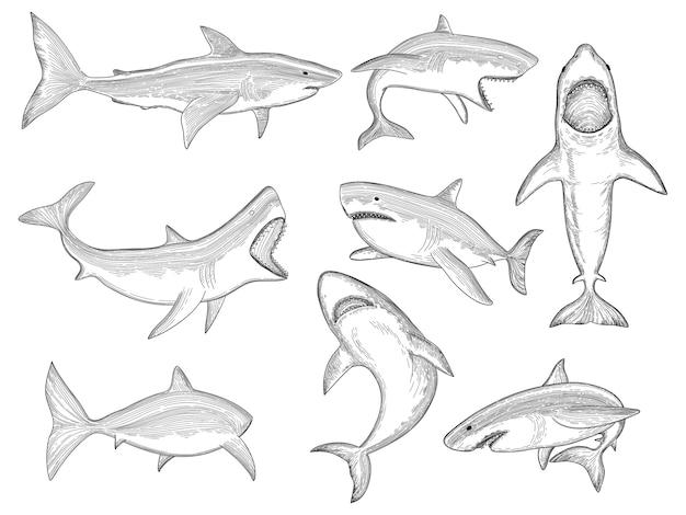 Tubarão do oceano. criatura flutuante com silhuetas de peixes marinhos grandes e desenho de tatuagem de tubarão de dente grande