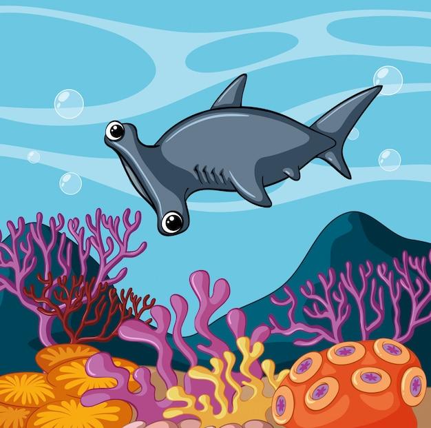 Tubarão martelo, natação, sob, a, oceânicos