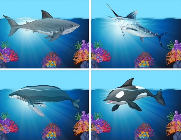 Tubarões e baleias no oceano