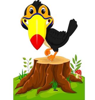 Tucano feliz no toco de árvore