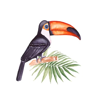 Tucano. pássaro tropical com folha de palmeira. aguarela