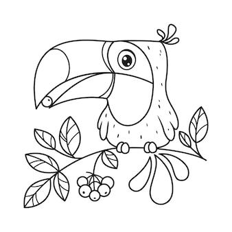Tucano se senta em um galho e come uma página para colorir de baga