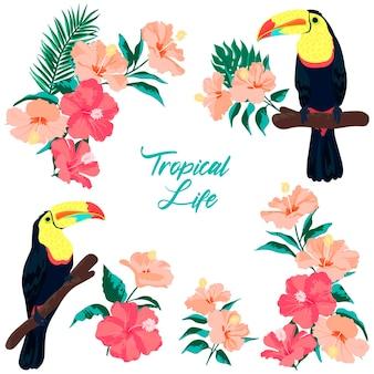 Tucanos e flores de hibisco. elementos isolados do vetor.