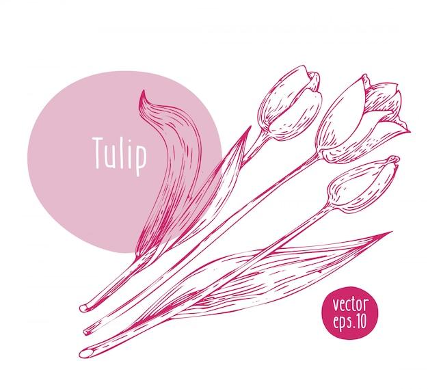 Tulipa retrô desenhada de mão.