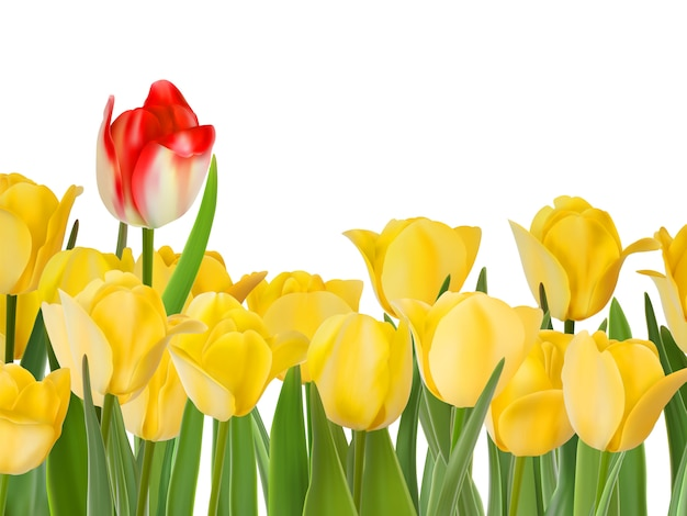 Tulipas amarelas e uma vermelha.