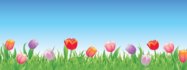 Tulipas bonitas para a primavera