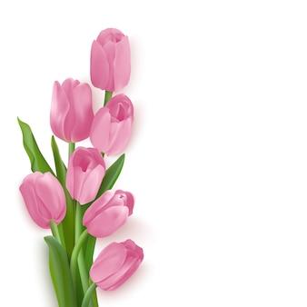 Tulipas cor de rosa em um fundo branco. flores no canto esquerdo.