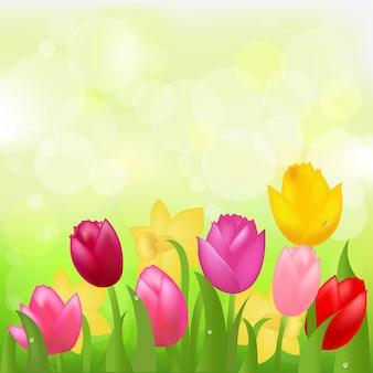 Tulipas multicoloridas e narcisos,