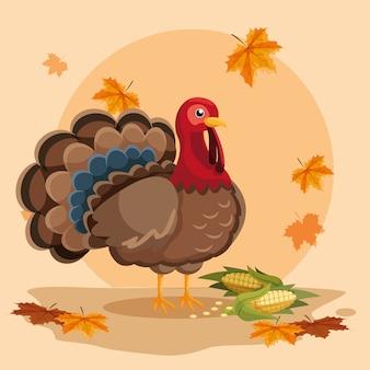 Turquia com espigas de dia de ação de graças