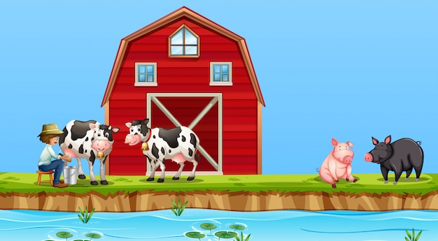 Um, agricultor, vaca ordenhando, em, fazenda