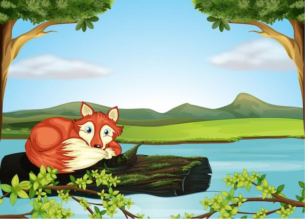 Um animal selvagem no rio