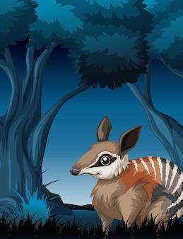 Um bandicoot na floresta escura
