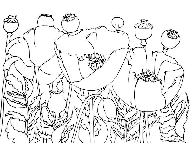 Um campo de papoulas em flor é uma página de livro para colorir Vetor Premium