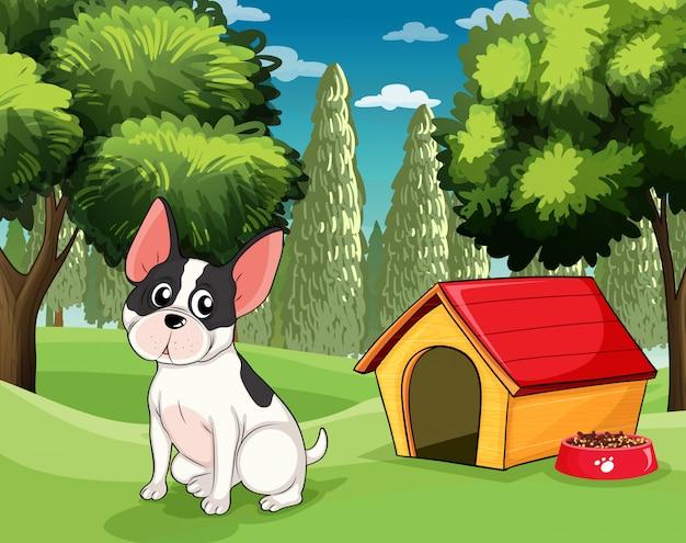 Um, cão, perto, um, doghouse, com, um, alimento cão