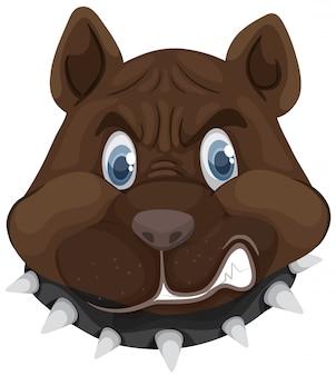 Um cão pitbull irritado no fundo branco