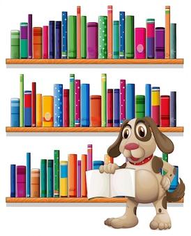 Um cão segurando um livro na frente das estantes