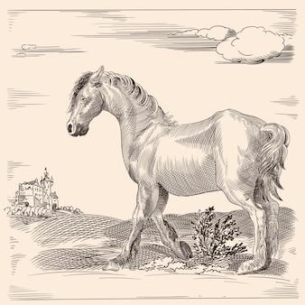 Um cavalo magro sem sela. de uma gravura medieval em um fundo bege.