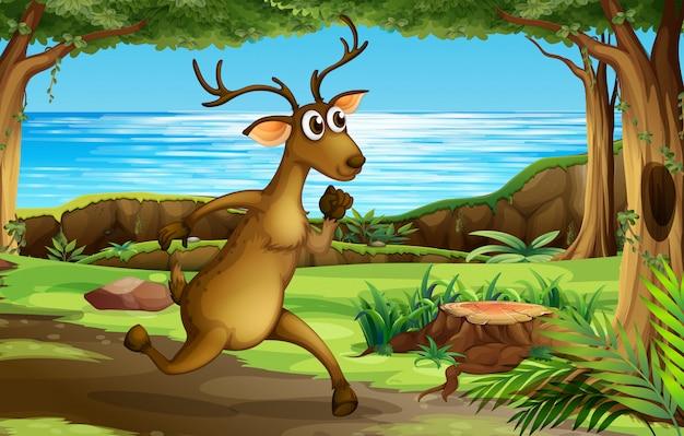 Um cervo correndo na floresta