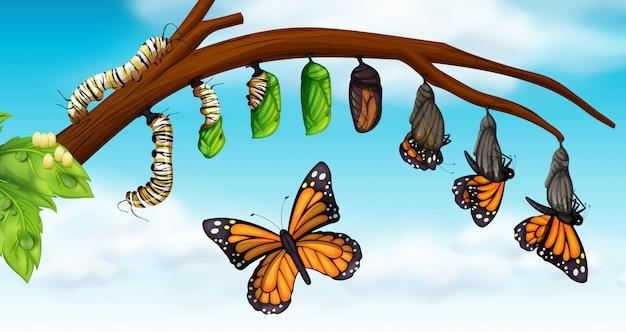 Um ciclo de vida da borboleta