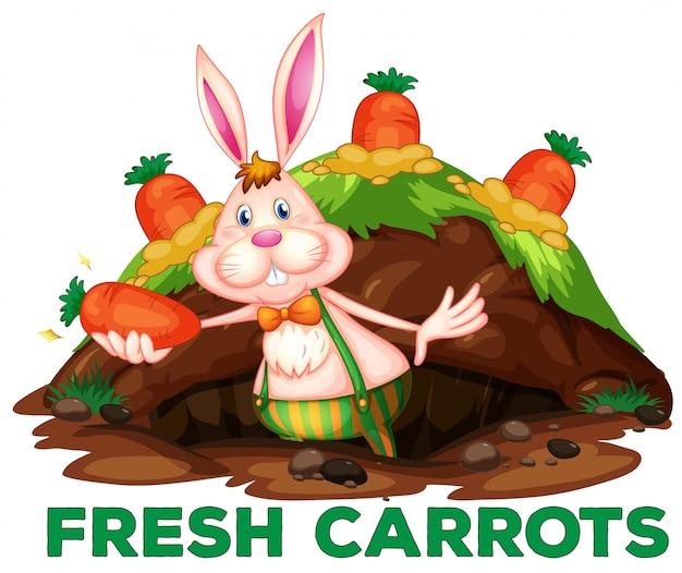 Um coelho bonito e cenouras
