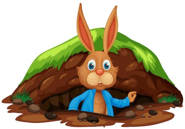 Um coelho bonito saindo do buraco