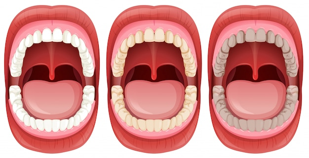 Um conjunto de anatomia da boca humana