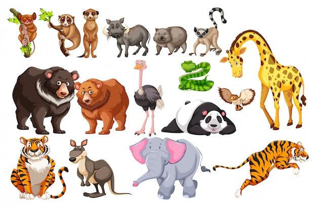 Um conjunto de animais selvagens no fundo branco