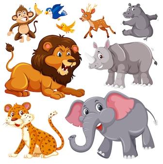 Um conjunto de animais selvagens