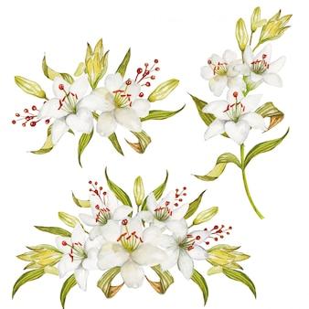 Um conjunto de arranjo floral belo lírio branco aquarela