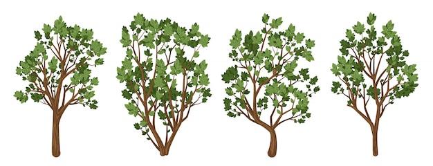 Um conjunto de árvores.