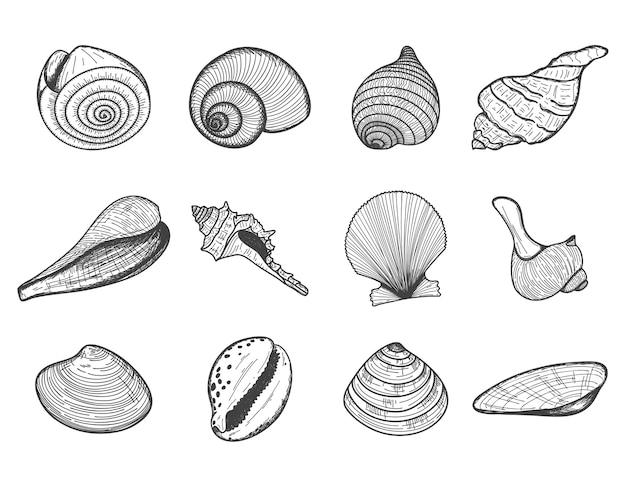 Um conjunto de conchas isoladas em branco