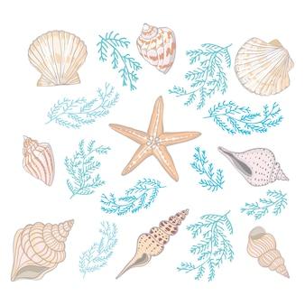 Um conjunto de diferentes belas conchas em um fundo branco.