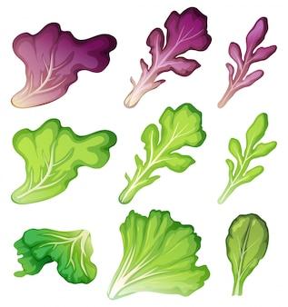 Um conjunto de folhas de salada