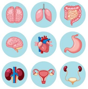 Um conjunto de órgãos humanos