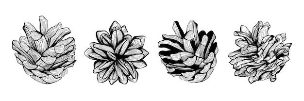 Um conjunto de pinhas. ilustração vetorial