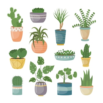 Um conjunto de plantas caseiras em vasos. plantas decorativas no interior da casa. estilo simples.