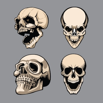 Um conjunto de quatro crânios em diferentes posições