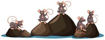 Um conjunto de ratos no fundo branco